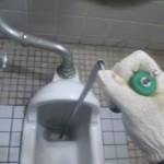 汚水通管作業