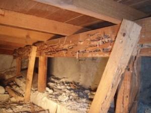 床下シロアリ被害の一例です。